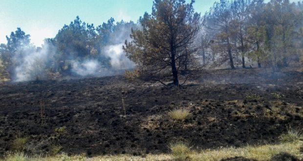 Лесной пожар на склоне горы Эчки-Даг и бухты Лисья ликвидирован