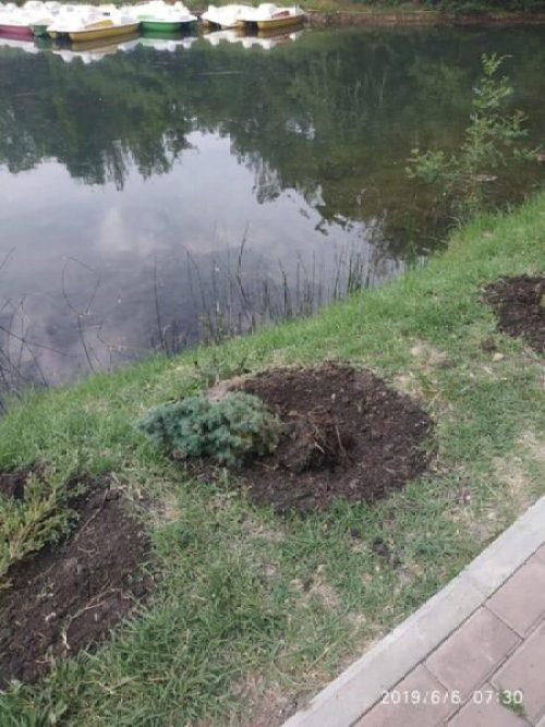 В Гагаринском парке Симферополя кто-то украл целую аллею деревьев и кустарников