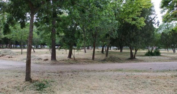 Покос травы в Симферополе идет по плану