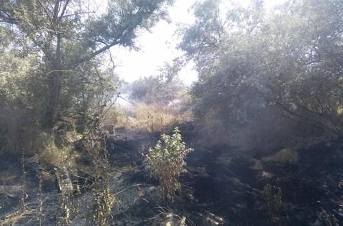 В Крыму практически ежедневно горит сухая растительность