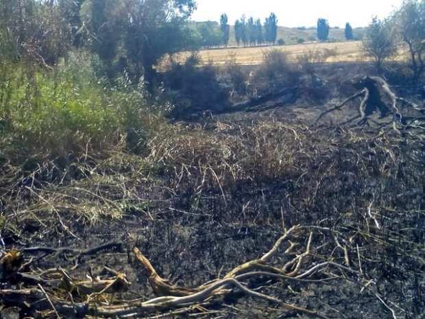 Близ крымского села Табачное «природный» пожар едва не «зацепил» трансформаторную подстанцию
