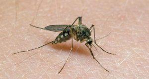 В Белогорске зарегистрирован случай заболевания лихорадки Западного Нила.