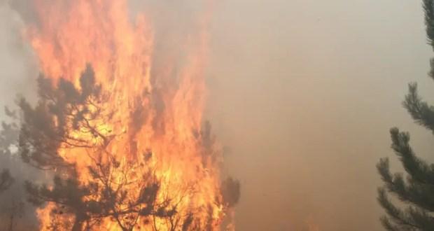 Лесной пожар в Кировском районе Крыма. Огнем был охвачен гектар территории