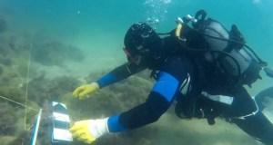 В Херсонесе открывается «Крымская подводная неделя»