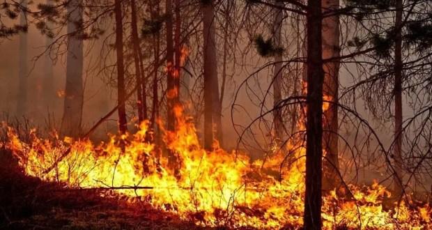 Лесной пожар под Алуштой: выгорело полтора гектара