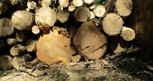 В Симферопольском и Бахчисарайском районах пресечены факты незаконной заготовки дров