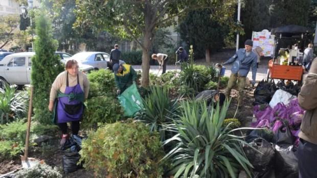 Улицы Ялты украсят многолетние цветы