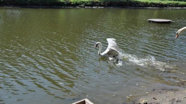 Симферопольцам напомнили: рыбная ловля в пруду Гагаринского парка запрещена