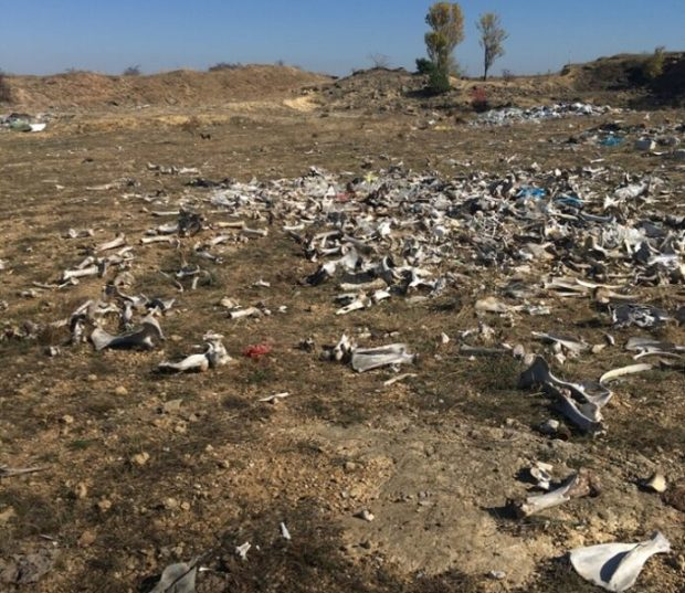 О поле, кто тебя усеял... В Бахчисарайском районе Крыма ликвидирована свалка с биологическими отходами