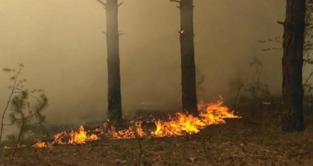 Под Симферополем, в районе села Доброе с ночи горит лес