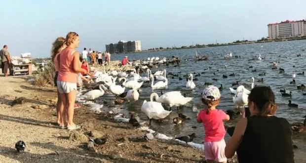 """В Евпатории намерены обустроить """"Лебединое озеро"""". Чтобы гулять и птиц кормить"""