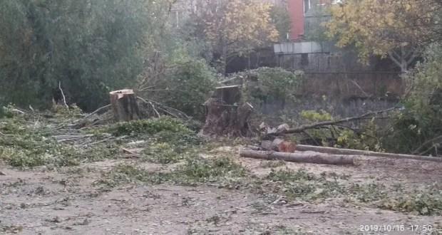 В Симферополе прокуратура инициировала доследственную проверку по факту незаконной рубки деревьев