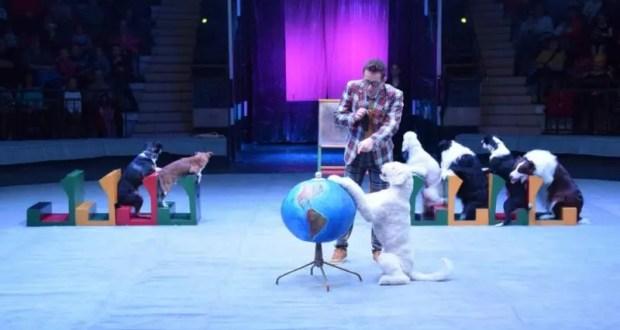 Ёлка в цирке - новогодний праздник для юных симферопольцев