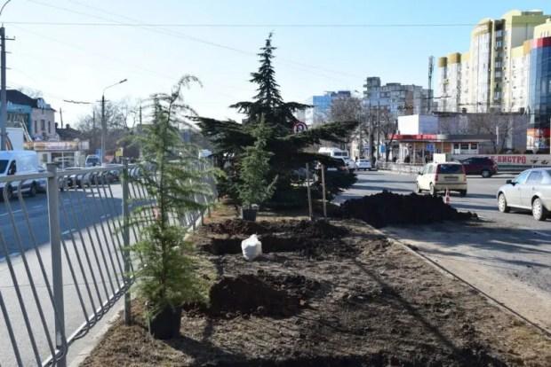 На улицах Симферополя будут расти можжевельники и кедры
