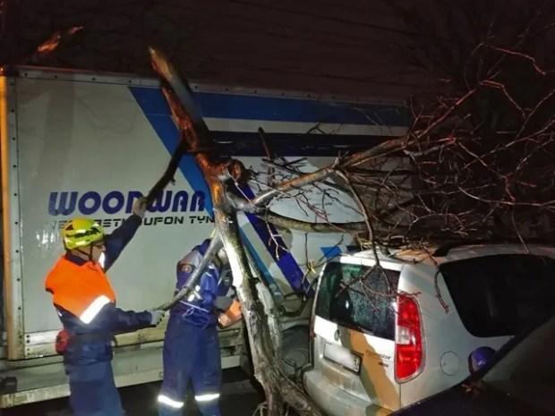 В Симферополе, на улице Титова на автомобили упало дерево
