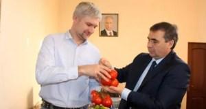 Крым намерен заняться экспортом томатов. На мировой рынок в том числе...