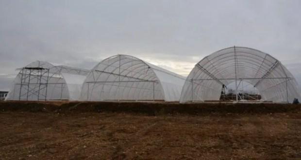 Фермеры намерены накормить Севастополь земляникой