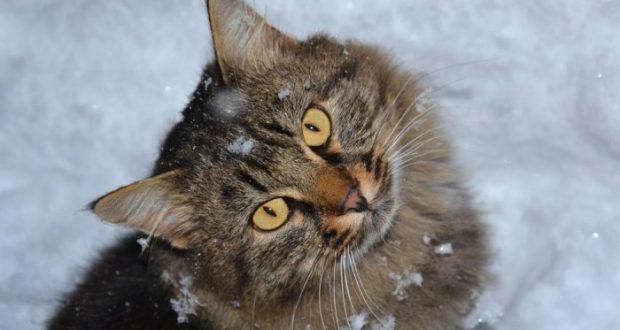 В Крыму - зима! Со снегом, ветром и гололедицей