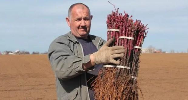 В Крыму закладывают виноградники