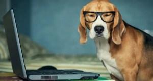 Товары для домашних животных онлайн – удобно, безопасно, недорого