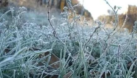 МЧС предупреждает о ночных и утренних заморозках в Крыму