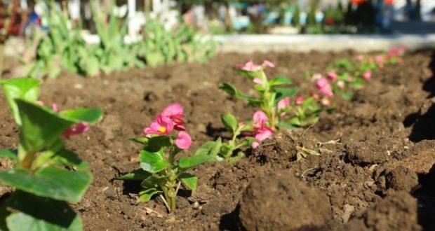 В Детском парке Симферополе высадят тысячи цветов
