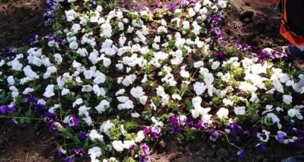 В Симферополе высаживают цветы, благоустраивая городские улицы и парки