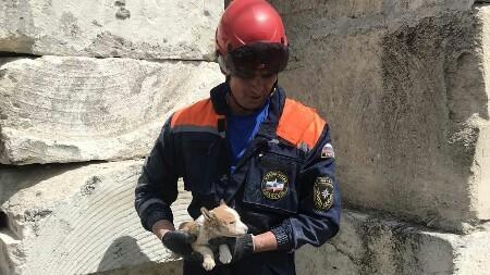 """В Белогорске спасали собаку - щенок не мог самостоятельно выбраться из """"ловушки"""""""