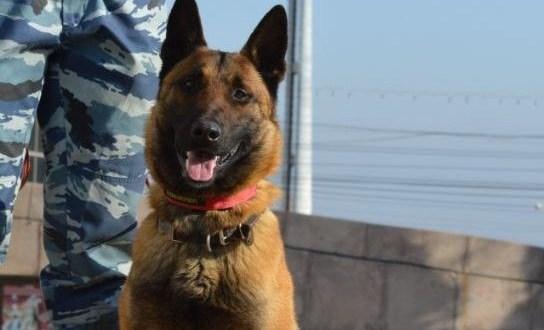 Благодаря полицейскому псу по кличке Горыныч, в Симферопольском районе задержали ночных воров