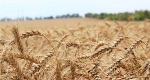 17 фермеров Крыма получат гранты на развитие хозяйств