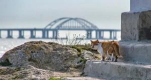 Кот Моста покидает нас. Куда переезжает главный талисман стройки Крымского моста