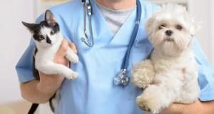 Дай лапу и пойдём к врачу: в каких случаях собаку или кошку необходимо показать ветеринару