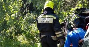 ДТП под Ялтой: дерево встало на пути «Тойоты». Трое пострадавших