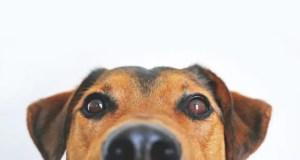 Маленькая спасенная жизнь: Сотрудники «КРЫМ-СПАС» оказали помощь собаке, упавшей в колодец