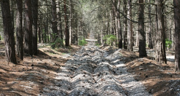 соблюдать запрет на посещение лесов