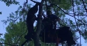 В Крыму с дерева снимали очередного парапланериста