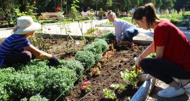 В Детском парке Симферополя высаживают хризантемы и не только