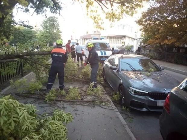 В Симферополе на BMW упало дерево