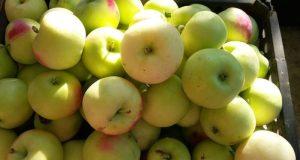 Чудеса: розничные цены на сельскохозпродукцию в Крыму… ниже рыночных