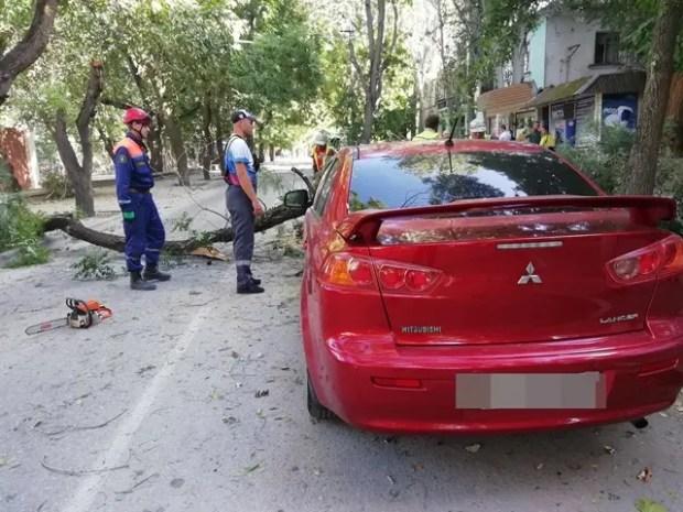 В Феодосии дерево упало на автомобиль. Спасатели говорят: штормовые погодные условия