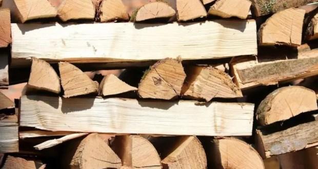 Жителям Крыма разрешено заготавливать древесину для собственных нужд