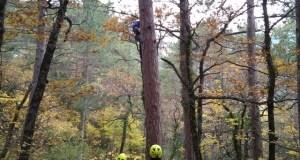 «КРЫМ-СПАС» помог парапланеристу, зависшему на дереве