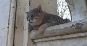 Коты Херсонеса отпраздновали Всемирный день домашних животных