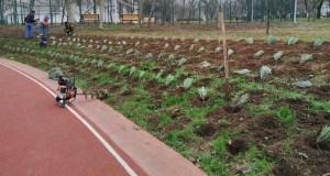 В селах Симферопольского района массово высаживают лаванду