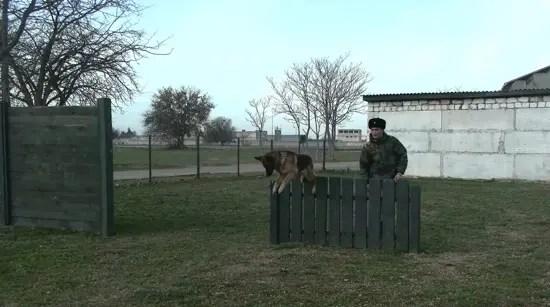 В инженерном полку армейского корпуса Черноморского флота проходят занятия кинологов