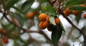 25 января Никитский ботанический сад ждёт студентов Крыма. Вход свободный