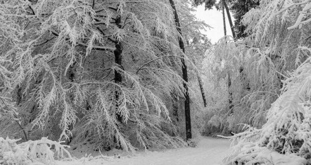 МЧС Республики Крым предупреждает: в непогоду от походов в горы и леса лучше не ходить