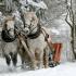 Туроператоры подвели итоги новогодних путешествий и отдыха на российских курортах
