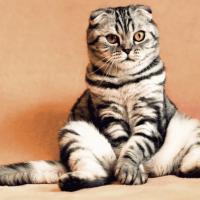 26 января — Ермилов день или День Ерёмы. Смотрим на кота