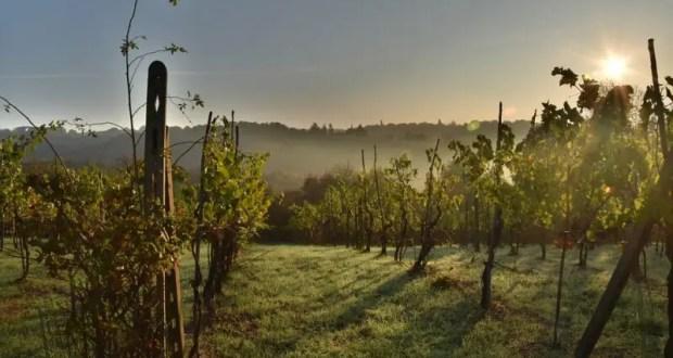 В России утвердили территориальное деление виноградопригодных земель